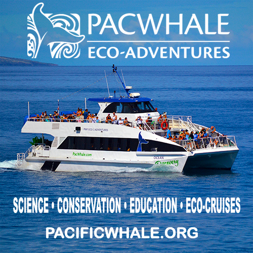 PacWhale Eco Adventures