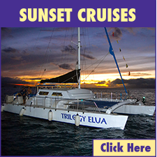 Maalaea Harbor Sunset Cruises link
